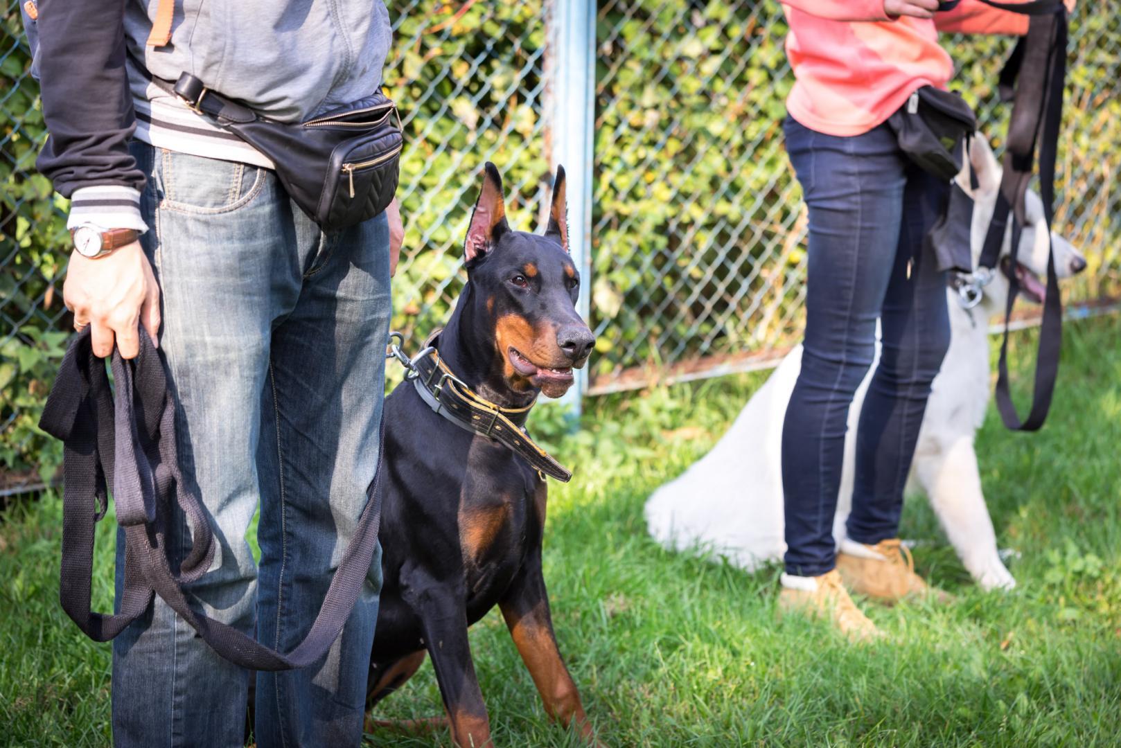 Educateur canin à domicile Abaucourt, Nancy – CDN SERVICES